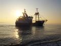 ter-duinen-et-peche-en-mer-22-mars-2011-084-medium